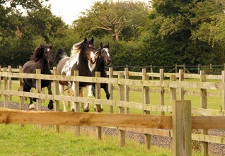 Quarantine lifted at Redwings' largest farm