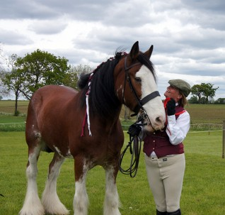 Enter the 2016 Redwings Show