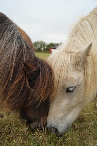 free activities for kids this half term at Redwings Caldecott