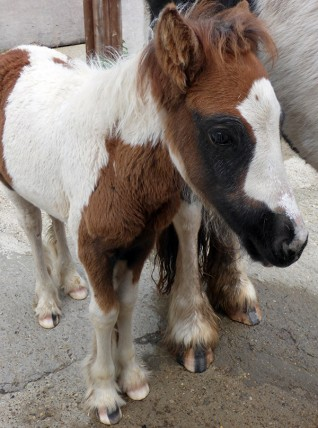 Orphan foal Rocket