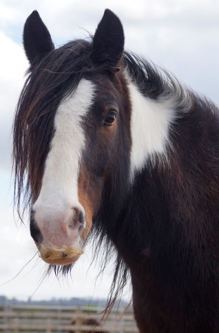 Redwings Adoption Star Rumpel celebrates his 10th birthday