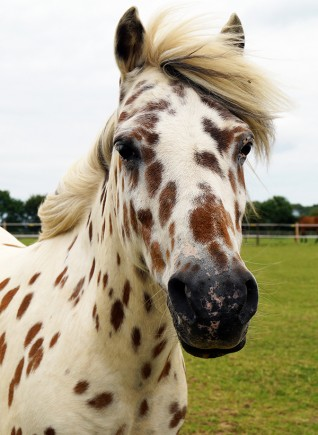 Redwings Horse Sanctuary launches new Adoption Star Cookie
