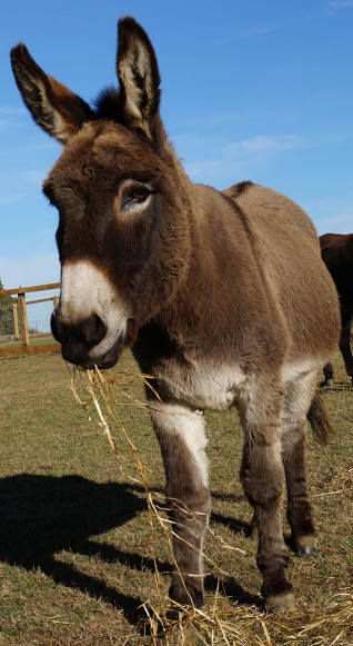 Celebrate Adoption Star Del Boy's birthday at Redwings