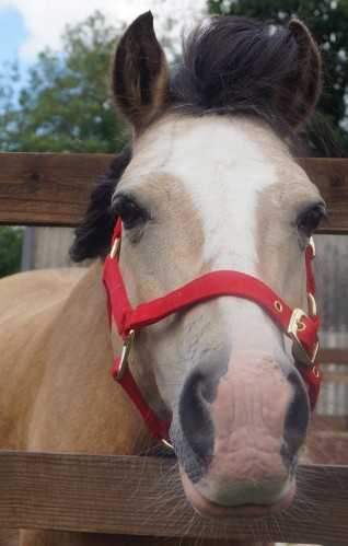 Redwings Adoption Star Elvis is celebrating his birthday