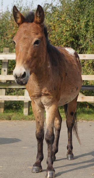 Redwings Horse Sanctuary transforms life of Riley the hinny
