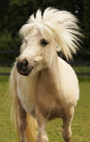 Redwings Adoption Star pony Tinkerbell
