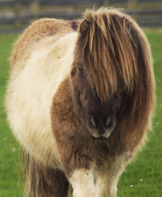 Celebrate the birthday of Adoption Star Wensley at Redwings Oxhill