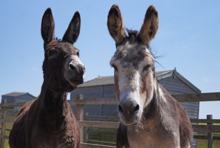 Redwings Adoption Stars Wiggins and Wacko are throwing a birthday party