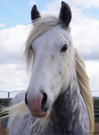 Adoption Star Major retires from the Redwings Adoption Scheme