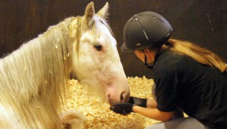 Tilbury's care is ongoing at Redwings' Horse Hospital