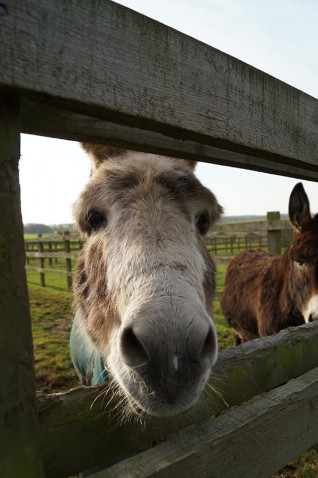 Free activities for families at Redwings Ada Cole this Christmas holiday