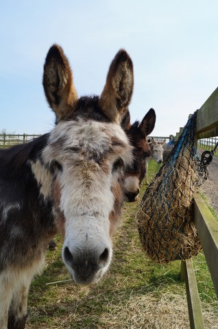free activities for kids this Easter holidays at Redwings Aylsham