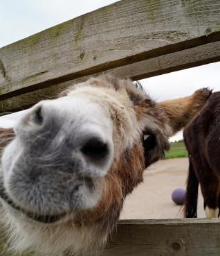 Visit Redwings Horse Sanctuary