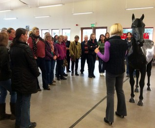 Older horse care and sweet itch