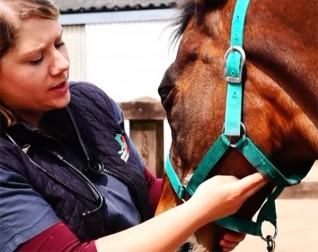 Taking your horse's pulse