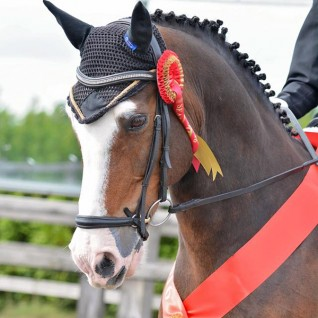 Dressage event for Redwings
