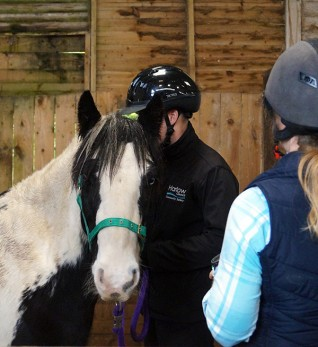 Control of Horses Act training