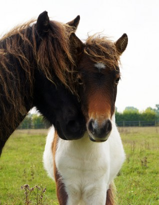 Mrs Clonkers and her foal Peaches