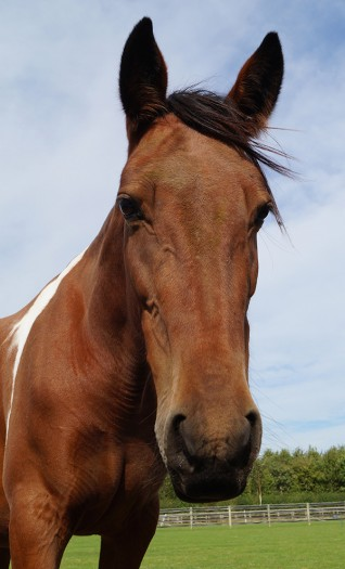Visit Cowslip at Redwings Oxhill