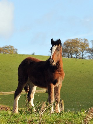Kidderminster rescue of 19 Shire horses