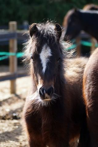 Llangynidr ponies rescue