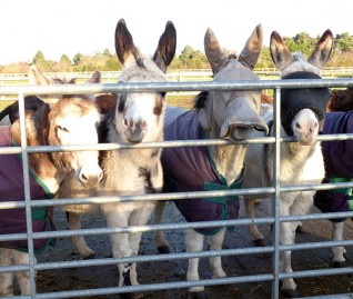 Fab fundraiser helps keep Redwings residents warm for winter