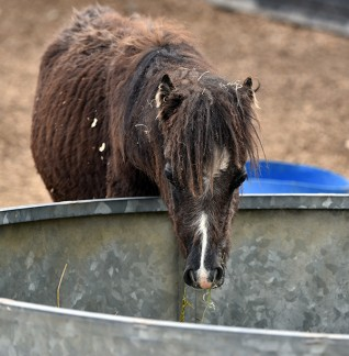 Redwings rescues horses from Bodmin Moor