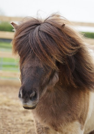 Free summer fun at Redwings Horse Sanctuary in Warwickshire