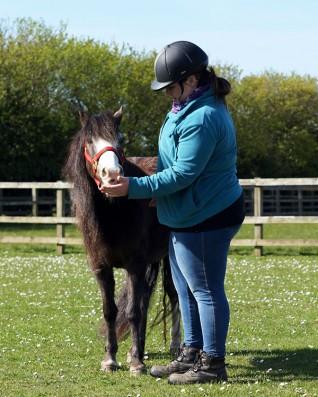 Reward-based horse training seminar