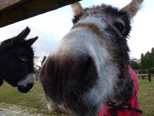 Visit Redwings Mountains for free this Easter