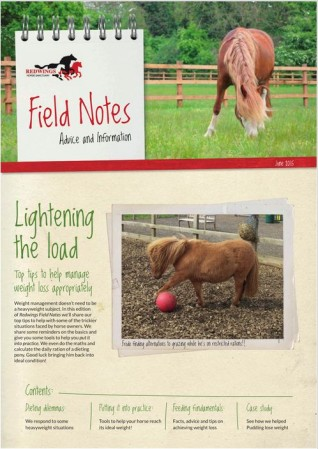 Weight management image - article on weight loss in horses