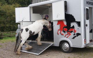 A horse being loaded on to a horse lorry