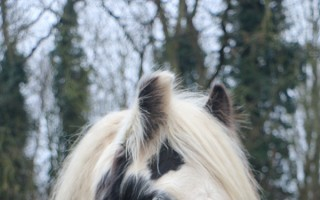 Redwings rescue pony Noah being rehomed