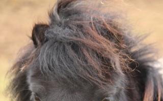 New Redwings Adoption Star Dayzee
