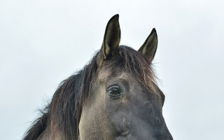 Give horses a go