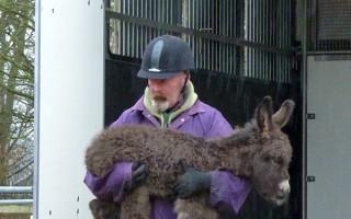 Donkey foal arrives at Redwings